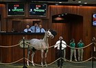 $1.9 Million Tapit Filly Sets OBS Record