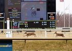 Nothing Runs Like A Deer: A pair of deer run on the turf course March 11 at Laurel Park.