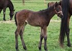 Rallying Cry - Baker Girl filly.