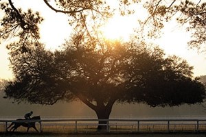 Southern Charm: A morning gallop occurs as the sun rises in Aiken, S.C., a city where the horse is revered.  See our special section on Aiken in this week's issue of The Blood-Horse.