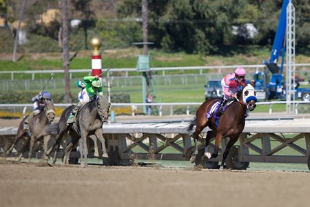 She's A Tiger (pink) leads the Breeders' Cup Juvenile Fillies (gr. I) field around the final turn on November 2, 2013.