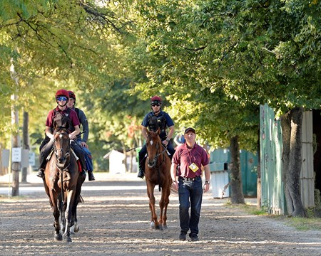 Caption: Magician, left front, walks with Adelaide and Eye of the Storm after going to the track. 