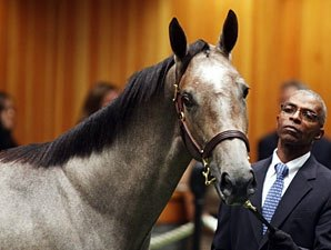 2012 Saratoga Sale Topper Nearing Debut