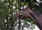 The late Royal Delta, dam of Delta's Royalty, at Saratoga Race Course