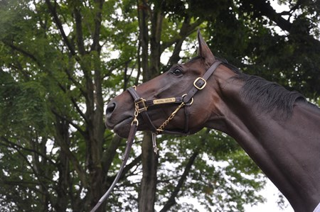 Royal Delta at Saratoga.