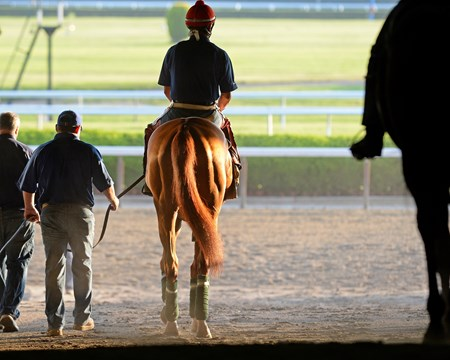 Caption: Alan Sherman walks California Chrome to the track. 