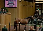 Harriet, a Hard Spun mare in foal to Uncle Mo, brought $350,000 at the Keeneland November breeding stock sale Friday, Nov. 7.