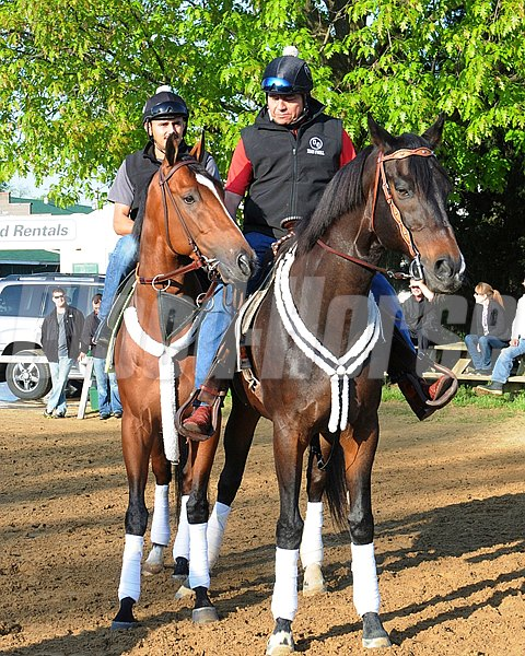 Goldencents, Kentucky Derby 2013