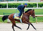 American Pharoah gallops at Churchill Downs April 19.