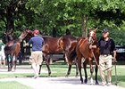 Fasig-Tipton Kentucky July Sale.