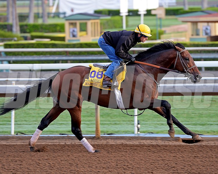 Majestic Harbor on Oct. 26, 2014, at Santa Anita in preparation for the Breeders' Cup.