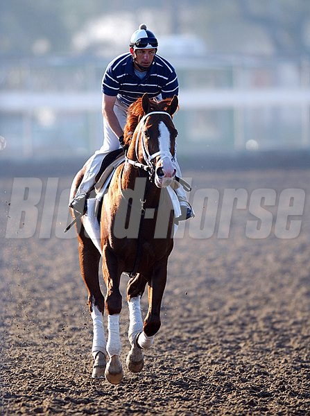 Photo from The Fair Grounds Race Course - Master Command, trained by Todd Pletcher and ridden by exercise rider Tony Tamburino at the Fair Grounds race course for the New Orleans Handicap to be held saturday at the Fair Grounds Race Course.
