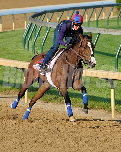 "Summer Soiree, trained by Graham Motion. Graham says; ""Summer Soiree was a rangier type. She was one of the better work horses I have ever had. I believe she worked at Keeneland one day in 1:09 and change leading up to the Kentucky Oaks (gr. I). """