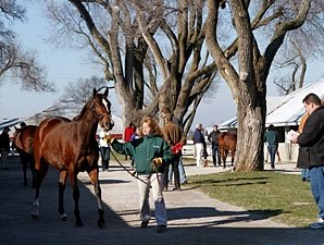 Keeneland January Sale Gross Exceeds $30M