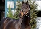 Kentucky Derby Winner Go for Gin