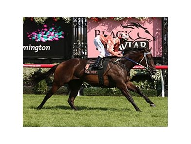 Black Caviar cruises to a new track record in the Black Caviar Lightning Stakes.