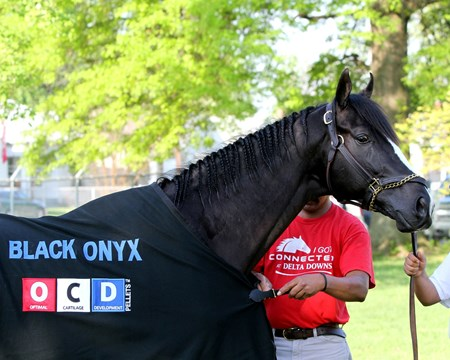 Black Onyx at Churchill Downs on May 1, 2013.