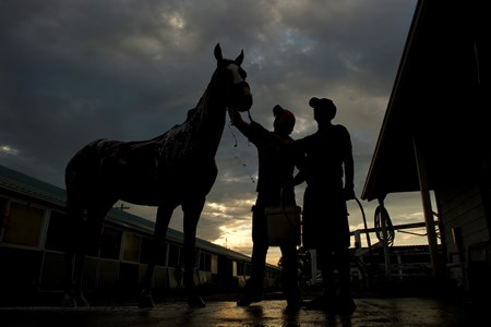 Trainer Jamie Attard gives Lions Bay a bath after training at Woodbine.