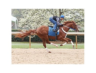 Bold Conquest works at Oaklawn Park April 6.