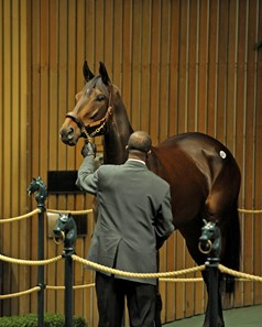 Royal Delta in the sales ring at the Keeneland November sale.