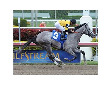 Flashy Gray makes her stakes debut in the Honeybee at Oaklawn Park.