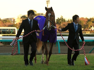 Orfevre following his Arima Kinen (Grand Prix) win.