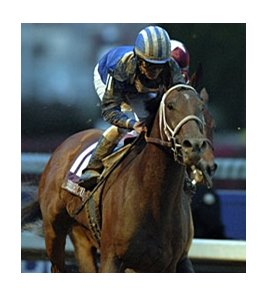 "Invasor<br><a target=""blank"" href=""http://photos.bloodhorse.com/Classics/Classic-Photos/22651042_hrMBZZ#!i=2685957993&k=Q82CB2k"">Order This Photo</a>"