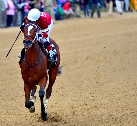 Untapable approaching the finish line.