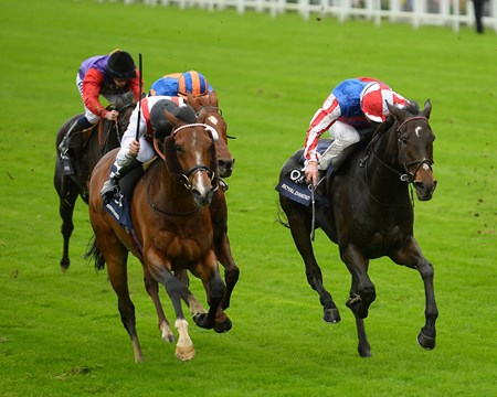 Royal Diamond with Johnny Murtagh up wins the Long Distance Cup at Ascot.