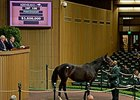 Naples Bay brought $3.6 million at the Keeneland November breeding stock sale.