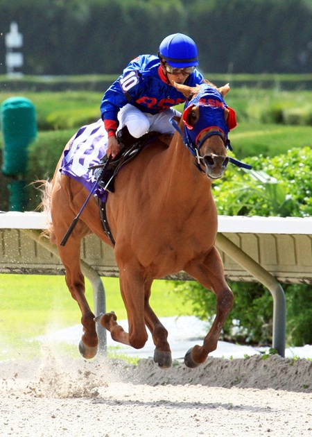 Wildcat Lily and jockey Jose L. Alvarez wins the Leave Me Alone Stakes at Calder Race Course in Miami Gardens, Florida.