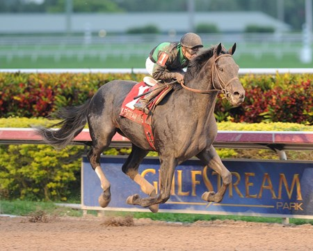 Just Call Kenny immediately shook up the 3-year-old division in South Florida posting an unlikely victory in the $100,000 Spectacular Bid Stakes at Gulfstream Park.