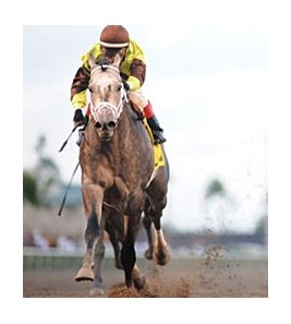 "Donn winner Graydar is the 100th stakes winner for Unbridled's Song.<br><a target=""blank"" href=""http://photos.bloodhorse.com/AtTheRaces-1/at-the-races-2013/27257665_QgCqdh#!i=2357991200&k=mhZzkfc"">Order This Photo</a>"