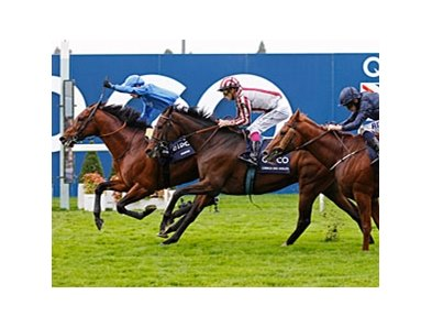 "Farhh (left) takes the QIPCO Champion Stakes over Cirrus Des Aigles (center) and Ruler of The World.<br><a target=""blank"" href=""http://photos.bloodhorse.com/AtTheRaces-1/at-the-races-2013/27257665_QgCqdh#!i=2843973930&k=zJcRRpq"">Order This Photo</a>"
