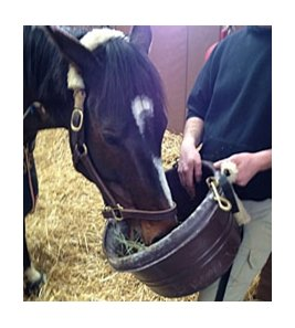 Rachel Alexandra at Rood and Riddle on Feb 16.