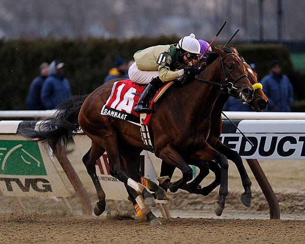 Samraat prevails over Uncle Sigh & In Trouble in the Gotham Stakes at Aqueduct in New York.