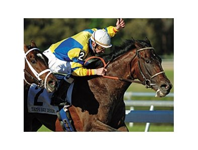 Street Sense winning the 2007 Tampa Bay Derby.