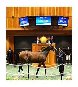 Hip 379 was the sale topper for session II of the Fasig-Tipton New York Bred Saratoga Sale.