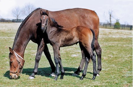 Set Them Free, dam of Giacomo, with her 2005 foal.