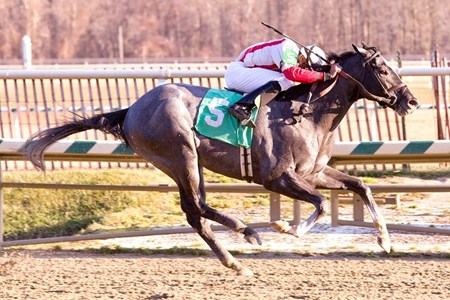 In this photo released by the Maryland Jockey Club, Beggarthyneighbor ridden by Malcolm Franklin wins the $100,000 Dancing Count Stakes for 3-year-olds at Laurel Park on Saturday, January 27, 2012. (Maryland Jockey Club, Jim McCue)