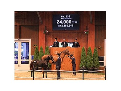 "Hip 338 was the Japan Racing Horse Association's foal session sale topper.<br><a target=""blank"" href=""http://photos.bloodhorse.com/AtTheRaces-1/at-the-races-2013/27257665_QgCqdh#!i=2624590598&k=NW3skJM"">Order This Photo</a>"