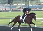 Dubai World Cup: Training 03/26/13 Part I