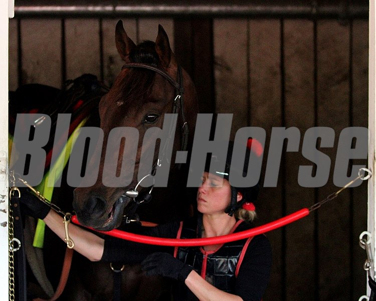 Orb in his stall with Exercise Rider Jen Patterson.