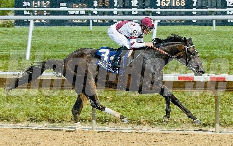 Royal Delta and jockey Mike Smith winning the 2013 Delaware Handicap (gr 1).