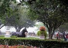 Walkin' In The Rain: Juveniles at the Fasig-Tipton 2-year-old sale are paraded Feb. 26 during a downpur at Calder Race Course.