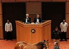 BetterBetterBetter, in foal to War Front, sold for $5.2 million at the Fasig-Tipton November sale.