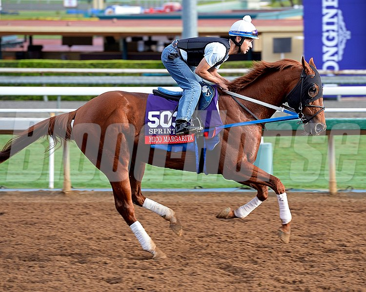 Mico Margarita on Oct. 26, 2014, at Santa Anita in preparation for the Breeders' Cup.