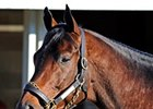 Blame Arrives At Claiborne Farm