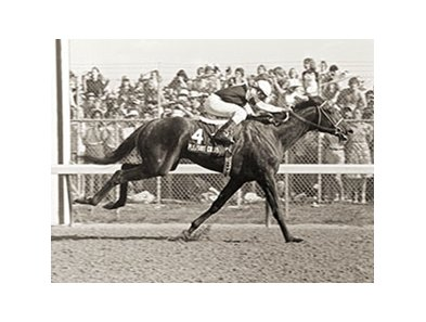 Pleasant Colony winning the Kentucky Derby.
