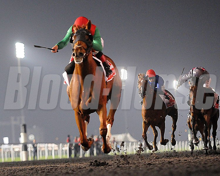 The drought for America in the Dubai World Cup (UAE-I) came to an end March 30 when champion Animal Kingdom burst clear in the homestretch for a spectacular score at Meydan Racecourse.